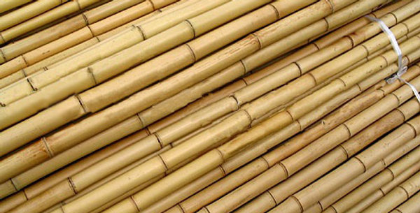 Bamboo Poles (pack of 25) - Various Sizes
