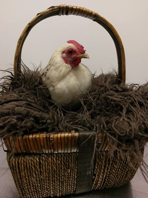 Chook in basket