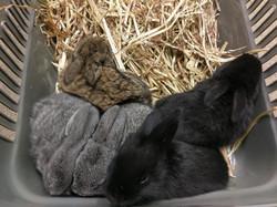 Bunnies x5