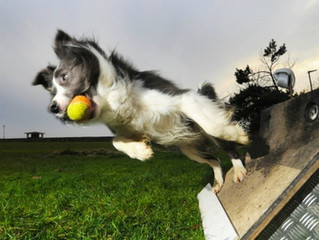 The three best high energy dog sports you've never heard of
