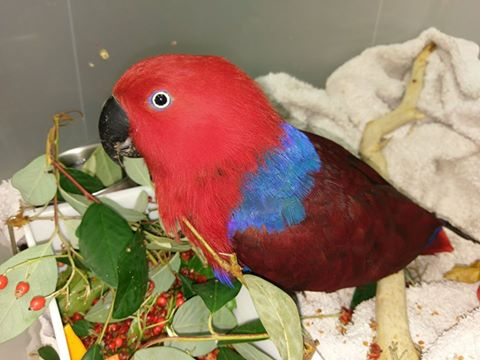 Parrot eating red and blue