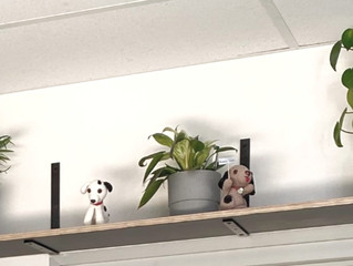 Pet-friendly indoor plants