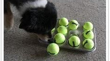 Indoor games to challenge your dog