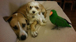 Dogs x2 and Parrot