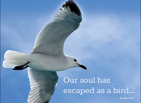 Our Soul Has Escaped! - Psalm 124:7