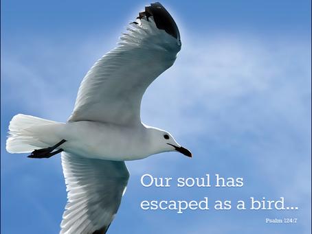 Our Soul Has Escaped! - Psalm 124:7