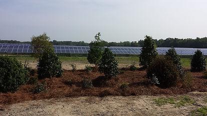 Mile solar buffer install4 WS.jpeg