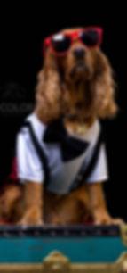 fotografía para mascotas en Colombia