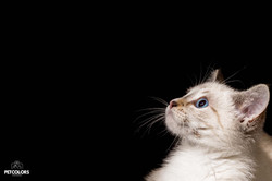 Fotografía para mascotas en Bogotá