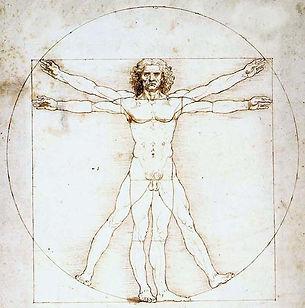 vitruvian man diagram