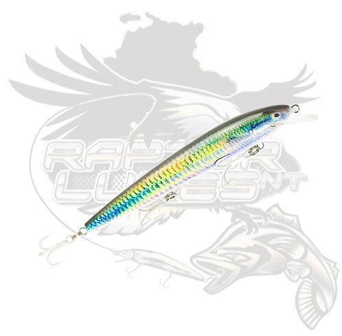 Dominator Live Series - Rainbow Fish
