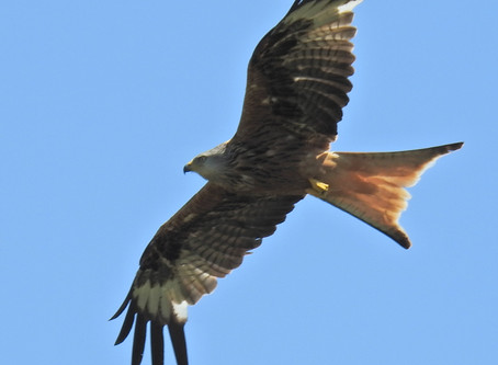 Your Turn To Soar...