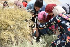 زيارات ميدانية لمحمية وادي دجلة