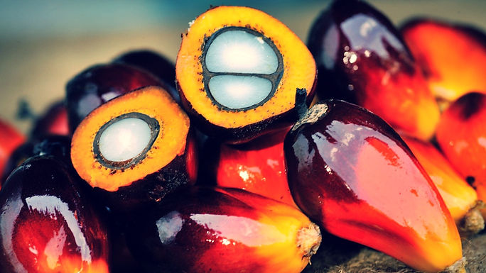 palm-oil-fruit-_edited.jpg