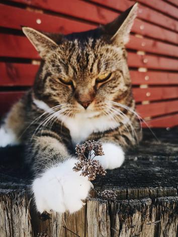 My Soulanimal. My Cat.