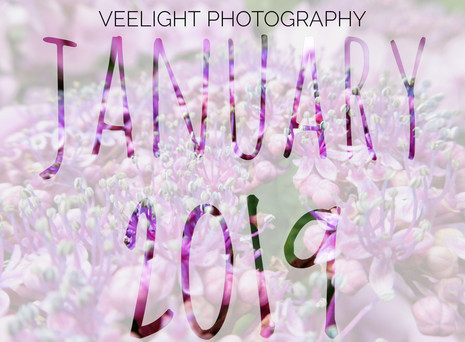 January: Another Year Gone By!