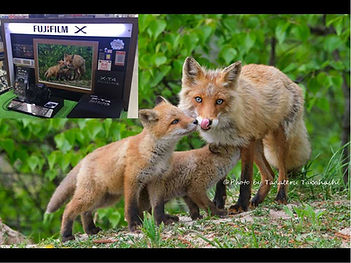 X-T4で撮影した北海道の野生動物作例写真!!