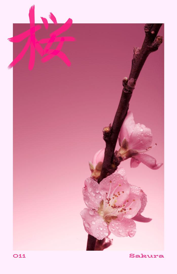 011/100 | Sakura