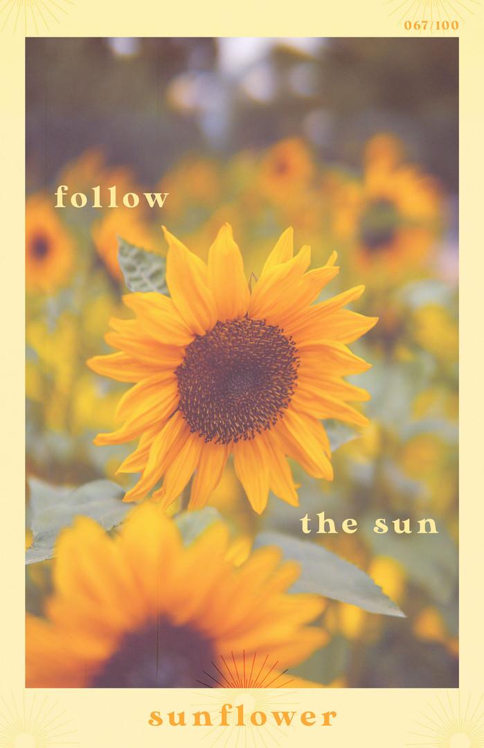 067/100 | Sunflower