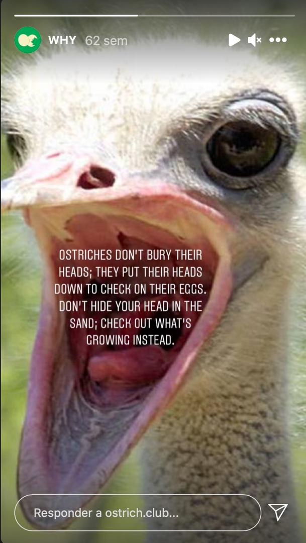 Misión de Ostrich Poster Club