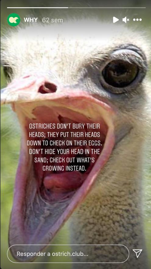Sobre Ostrich Poster Club