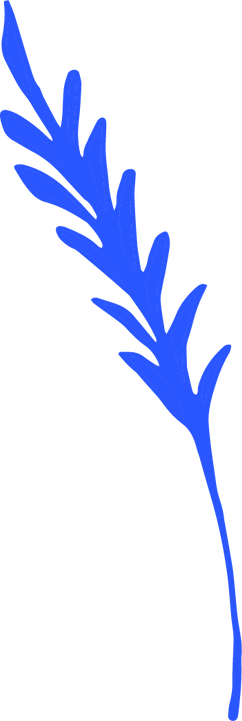 hojas-06.png
