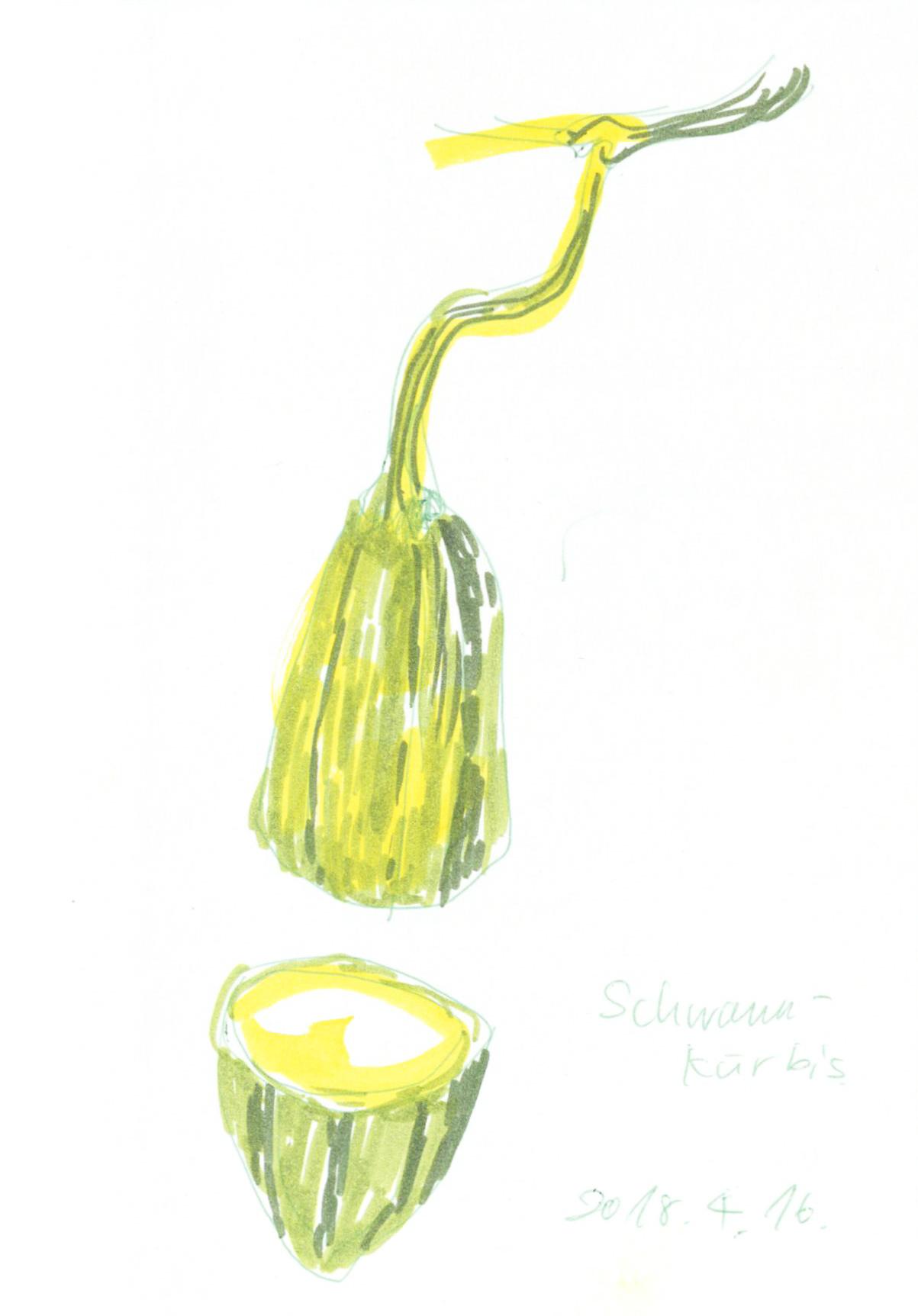 Schwammkürbis