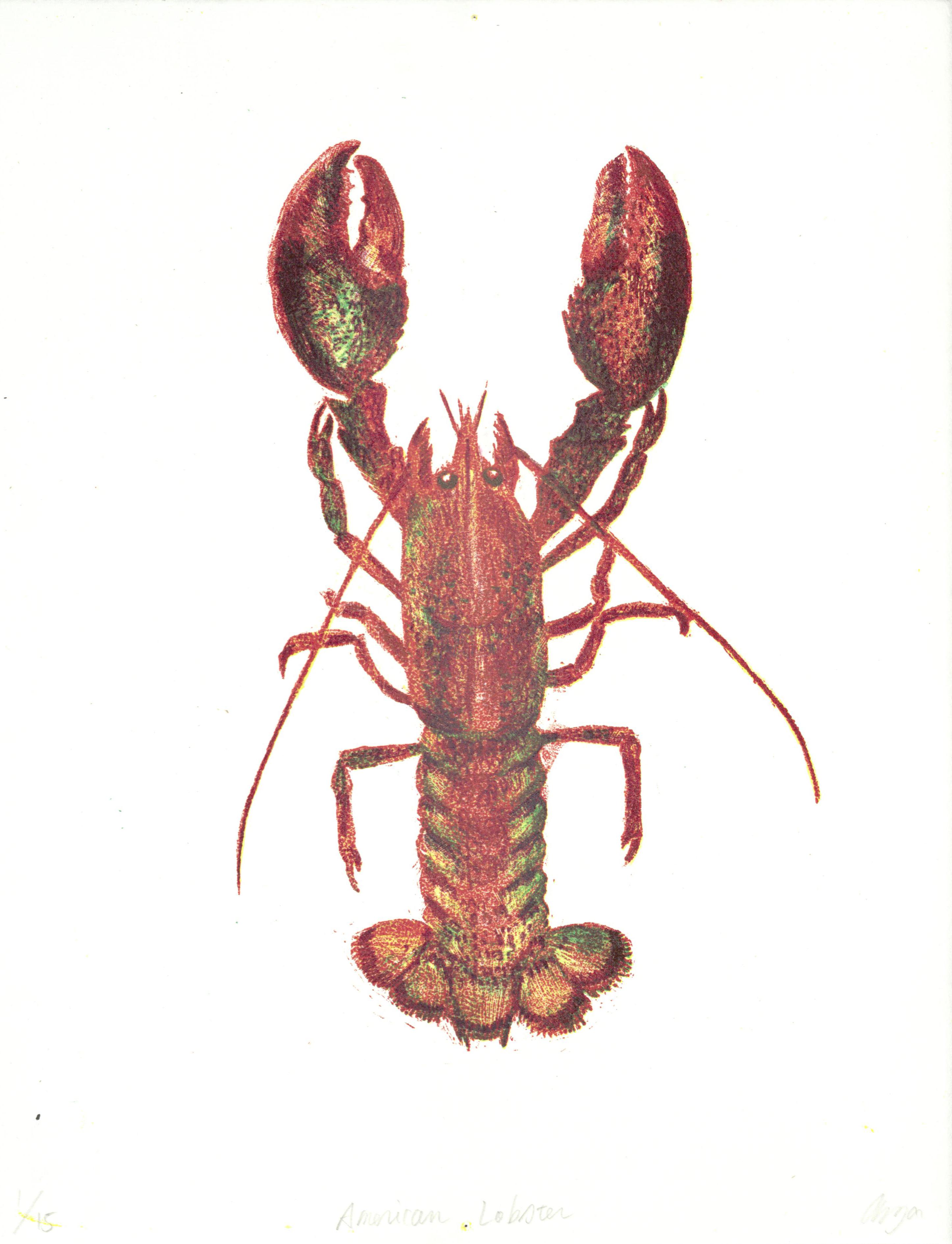 American Lobster.1_15