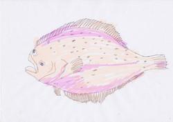 tizi.fish.probe.1