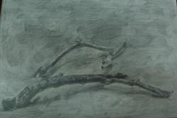 2004.流木