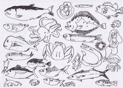 tizi.fish.drawing