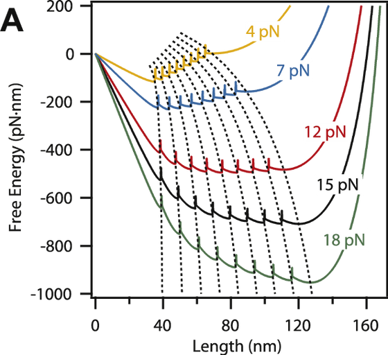 The Elastic Free Energy of a Tandem Modular Protein Under Force, By: J. Valle-Orero, et al.