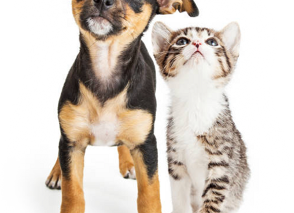 Dog Detox Powder Diatomaceous Earth