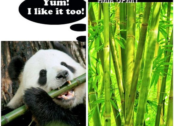 Natural Hair Spray Bamboo 5oz