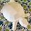 Thumbnail: Faceted turtle