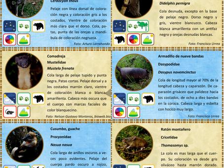 Pronto se publicará la Cartilla de mamíferos y aves de la Reserva Natural Bochica.