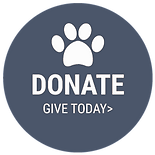 donate-button_orig_edited.png