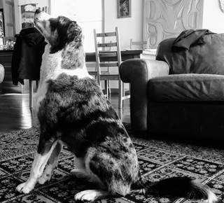 dog sculpture3.jpg