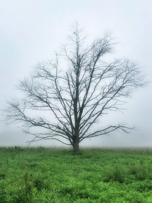 The Old Tree, Southampton, NY, Chromogenic Print, Series of 20