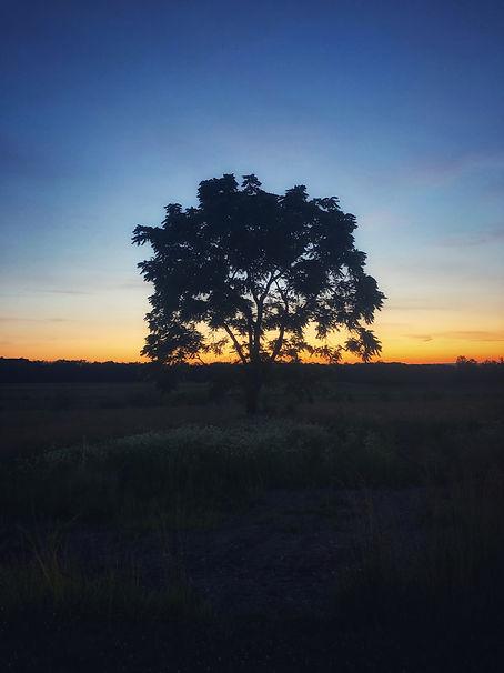 The War Tree, Gettysburg, VA, 2019, Chromogenic Print, Series of 20