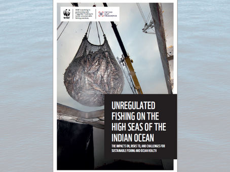 Unregulated Fishing in the Indian Ocean