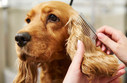 dog-groomer-today-main1-200413-1558196.j