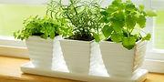 cultivo-de-plantas-aromaticas2-xl-668x40
