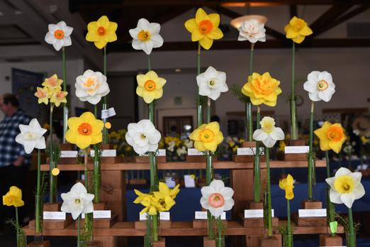 Daffodil Show.jpg