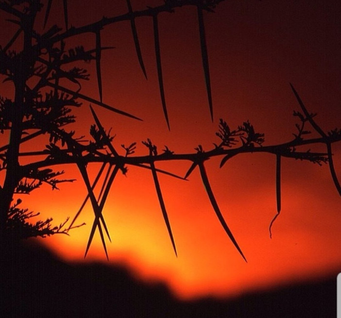 A Thorny Sunset
