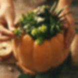 succulent pumpkin stock image_edited.jpg