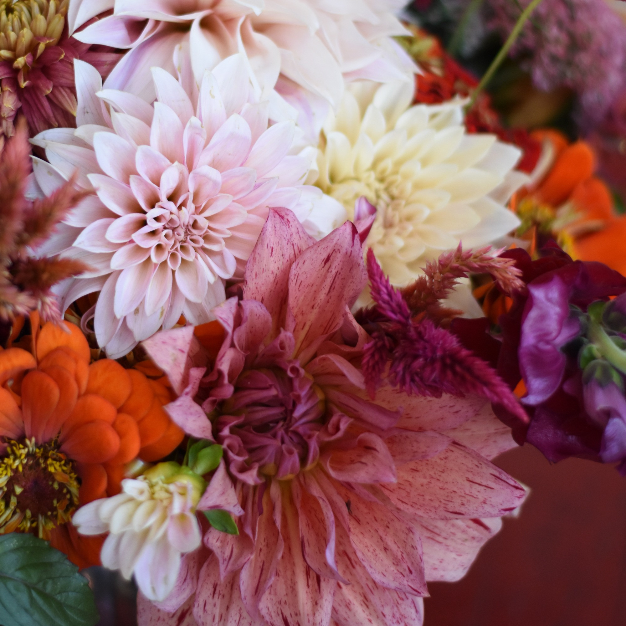 Hand-tied Bouquets Featuring Dahlias
