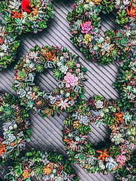 succulent wreath stock image.jpg