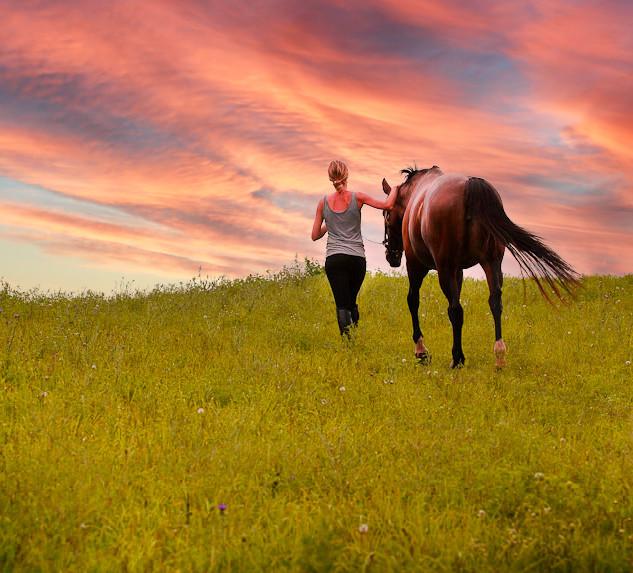 carlyhorse.jpg