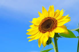 きれいな花を咲かせてみよう